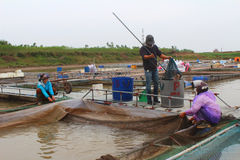 Fishermen and fish farm in river Royalty Free Stock Images