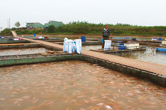 Fishermen and fish farm in river Stock Image