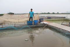 Fishermen and fish farm in river Royalty Free Stock Photos