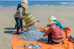 Fishermen with fresh catch of fish, Vung Tau province, Vietnam Stock Photography