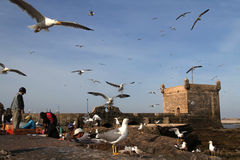 Fishermen at harbour of Essaouira Stock Photography