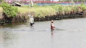 Fishermen are harvesting shrimp from pond stock video