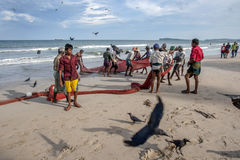 Fishermen haul their nets onto Uppuveli beach in Sri Lanka in the late afternoon. The fisherman spend hours hauling the nets from the ocean twice a day Royalty Free Stock Photo