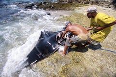 Fishermen,Lamalera. Fishermen cut 200 kilogram manta ray Stock Photos