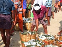 Fishermen, Marari Beach, Kerala India Royalty Free Stock Image