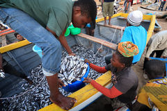 Fishermen and market women trading fish Royalty Free Stock Images