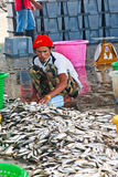 Fishermen move fishes in harbor Stock Photo