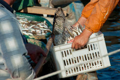 Fishermen pour the fish in the box Royalty Free Stock Photography