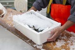 Fishermen prepare sardines for transportation Royalty Free Stock Photo