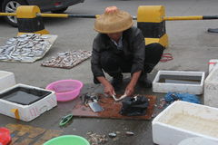 The fishermen processing seafood Royalty Free Stock Images