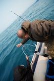 Fishermen pull salmon caught Stock Images