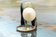 Fishermen pulling a fishing net Stock Image