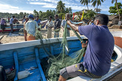 Fishermen remove their catch from their nets on Arugam Bay beach in Sri Lanka. Stock Image