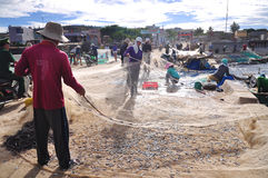 Fishermen are removing anchovies fish from their nets to start a new working day in Ly Son island Royalty Free Stock Photography