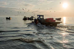 Fishermen return from the morning fishing and land the fish. Stock Image
