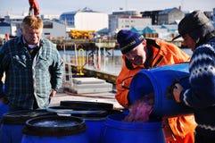 Fishermen in Reykjavik harbor, Iceland Royalty Free Stock Photos