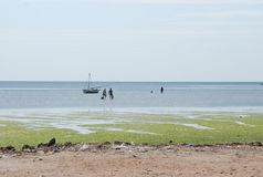 Tunisian fishermens in flowering green sea Royalty Free Stock Image