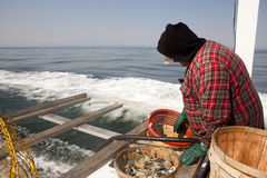 Fishermen at sea. A fisherman sorting out the crabs out at sea Royalty Free Stock Photos