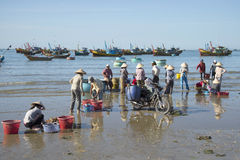 Fishermen sorting the catch of the night in the fishing village of Mui Ne. Vietnam. MUI NE, VIETNAM - DECEMBER 25, 2015: Fishermen sorting the catch of the night Royalty Free Stock Photo