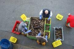 Fishermen sorting crabs Stock Photos