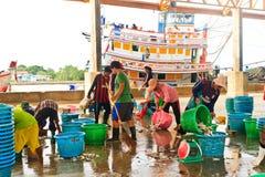 Fishermen sorting fishes in harbor Royalty Free Stock Image