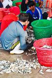 Fishermen sorting fishes in harbor Royalty Free Stock Image