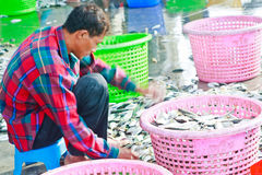 Fishermen sorting fishes in harbor Royalty Free Stock Photography