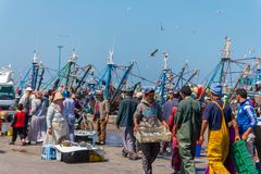 Fishermen sorting and selling freshly caught fish in the port of Essaouira. September 2, 2012 in Essaouira, Morocco, Africa Stock Image
