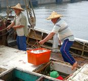 Fishermen Unload their Catch Royalty Free Stock Images