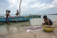 Fishermen and women collecting shellfish from their nets on the west coast beach on Delft Island in Sri Lanka. Stock Photos
