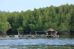 Fishermen wooden raft house near mangrove forest Stock Photography