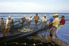 Fishermen working. Fishermen collect network with fish in the coast of Veracruz, Mexico stock image