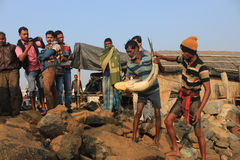 Fishermen Working. Digha, West Bengal in India on 7th February in 2017 - Fishermen collect fish in the coast of Digha, India Stock Images