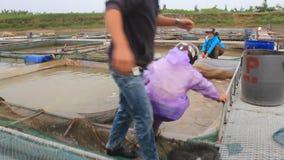 Fishermen working at fish farm stock video