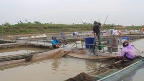 Fishermen working at fish farm stock footage