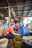 Fishermen working in fish market Royalty Free Stock Image