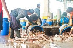 Fishermen working in harbor Royalty Free Stock Photo