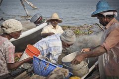 Fishermens in Cochin Royalty Free Stock Photography
