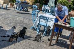 Fishermonger fillets рыба в гавани греческого острова Kastellorizo Стоковые Изображения RF