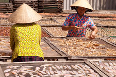 Fishery in Ba Tri province Royalty Free Stock Photography