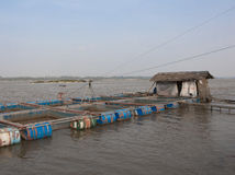 Fishery in the water cages at Khong river Thai Stock Photography