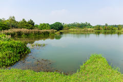Fishery wetland. With blue sky royalty free stock images