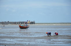 fishery women find some shellfish or crab hiding in sand on the beach Stock Photo