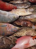 Fishes. In market for sale Stock Photo