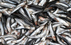 Fishes. Anchovy fishes in a fish market Stock Photography