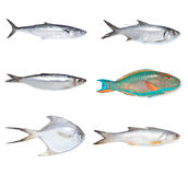 Fishes stock photos