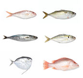 Fishes Stock Photography