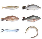 Fishes. Marine and fresh water fishes stock photo