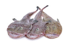 Free Fishes Stock Photography - 13775102