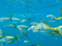 Fishes. In the Keys with one wondering what I am looking at Stock Photo